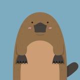 Милое большое тучное platypus Стоковые Изображения RF