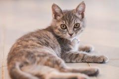 Милое, меховое усаживание кота Стоковая Фотография RF