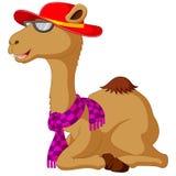 Милое усаживание шаржа верблюда Стоковое Изображение