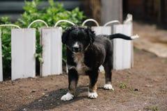 Милое усаживание щенка Стоковая Фотография RF
