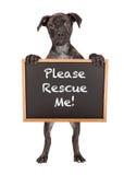 Милое удерживание щенка спасает меня знак Стоковые Изображения