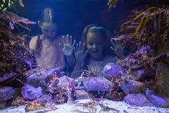 Милые девушки смотря садок для рыбы Стоковое Изображение