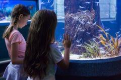 Милые девушки смотря садок для рыбы Стоковая Фотография RF
