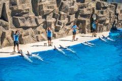 Милые дельфины во время речи на dolphinarium, Батуми, Geo Стоковые Изображения RF