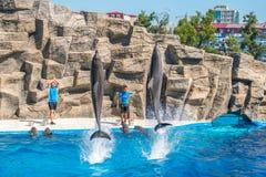 Милые дельфины во время речи на dolphinarium, Батуми, Geo Стоковое Изображение RF
