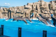 Милые дельфины во время речи на dolphinarium, Батуми, Geo Стоковые Фотографии RF