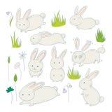 Милые зайчики и трава луга Стоковое Фото