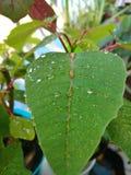 Милые лист с падениями росы Стоковые Изображения