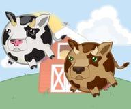 Милые коровы животноводческих ферм Стоковое Фото
