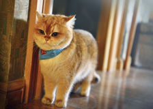 Милые коты нося шарф стоковые изображения rf