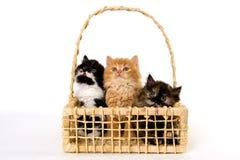 Милые котята в корзине на белой предпосылке стоковое изображение rf