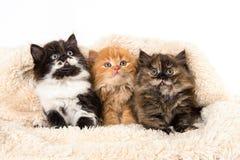 Милые котята на одеяле на белой предпосылке стоковое изображение