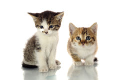 Милые котята Стоковое фото RF
