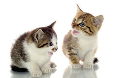 Милые котята Стоковые Фотографии RF
