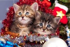 милые котята Стоковая Фотография RF