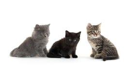милые котята 3 Стоковая Фотография RF