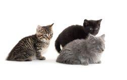 милые котята 3 Стоковое Изображение RF