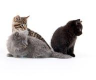 милые котята 3 Стоковые Изображения RF