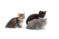 милые котята 3 Стоковая Фотография