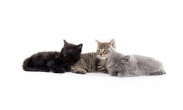 милые котята 3 Стоковые Фото