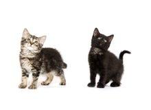 милые котята 2 Стоковое Фото
