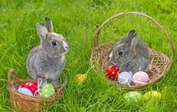 Милые кролики пасхи Стоковые Фотографии RF
