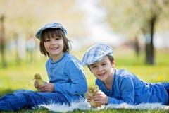 Милые маленькие дети, братья мальчика, играя с sprin утят Стоковое Изображение