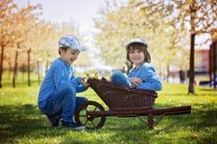 Милые маленькие дети, братья мальчика, играя с sprin утят Стоковое Фото