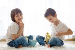 Милые маленькие дети, братья мальчика, играя с sprin утят Стоковая Фотография RF