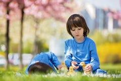Милые маленькие дети, братья мальчика, играя с sprin утят Стоковое Изображение RF