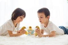 Милые маленькие дети, братья мальчика, играя с sprin утят Стоковое фото RF
