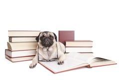 Милые маленькие книги чтения щенка собаки мопса с стеклами чтения стоковая фотография rf