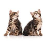 Милые маленькие котята Стоковые Изображения