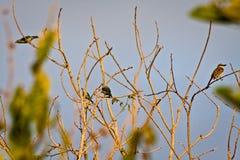 Милые маленькие птицы сидя на ветвях дерева Стоковые Фотографии RF
