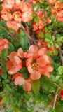 Милые оранжевые цветки Стоковые Фото