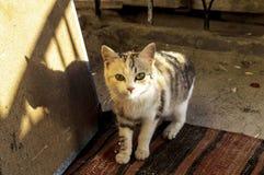 Милые отечественные крошечные крошечные изображения pussy, синь подкрашивали изображения кота, любимчиков Стоковое Изображение