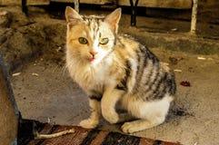 Милые отечественные крошечные крошечные изображения pussy, синь подкрашивали изображения кота, любимчиков Стоковая Фотография RF