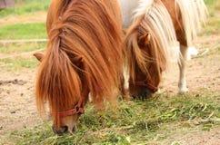 Милые лошади пони Стоковые Изображения RF