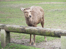 Милые олени в парке Nara стоковые изображения