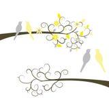 Милые птицы пар на ветвях Стоковая Фотография