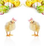 Милые пушистые цыпленоки и пасхальные яйца Стоковая Фотография RF