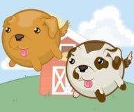 Милые собаки животноводческих ферм Стоковая Фотография RF