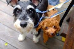 милые собаки Стоковая Фотография RF