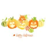 Милые тыквы хеллоуина и красный вектор кота конструируют объекты Стоковое Фото