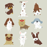 милые установленные собаки Стоковые Фото