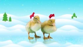Милые утята в шляпах рождества стоя на льде, предпосылке зимнего дня сток-видео