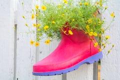 Милые цветки в ботинке стоковые фотографии rf