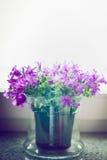 Милые цветки колокола в стекловарном горшке на windowsill Домашнее украшение стоковые изображения rf