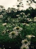 Милые цветки Стоковые Изображения