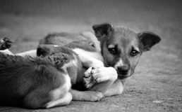 Милые щенята Стоковые Фото